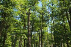 Ecosistemas terrestres  Los ecosistemas terrestres presentan muchas variaciones de fauna y vegetación, estando distribuidos en los distintos continentes y relacionados el clima de cada zona.