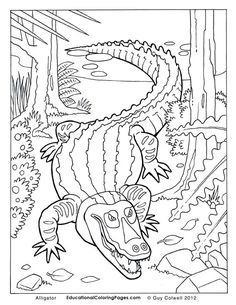 alligator coloring pages, alligator colouring pages