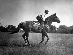 Man o' War - the most legendary race horse of all time.