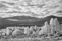 In this digital infrared photography tutorial we show you how to choose suitable subjects, set up your camera and compose infrared images.