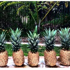 JESS OF TRADESLife Guide Blog (@jessoftrades)  •• DIY, crafts, spray paint, pineapple, pineapples, summer, decor, summer party, summer ideas, rum, gold, sparkle, pineapple crafts, party decorations, decoration ideas, party ideas, gold paint.