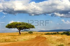 paisajes verdes: Hermoso paisaje con árboles en África