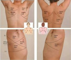 how to auscultation lungs - Google Search