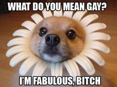 Fabulous bitch