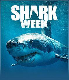Shark week party ideas