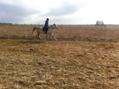 Friend, Arabian Horse, Arpaco, Training