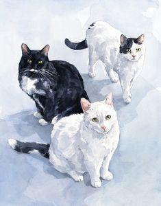 3 кошки акварельная живопись