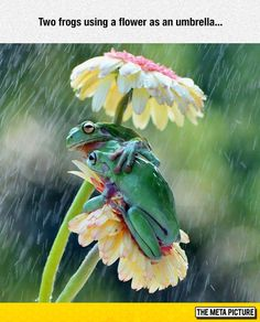 Natural Umbrella