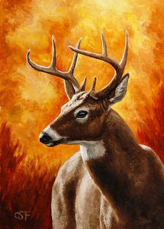 Deer Painting - Whitetail Buck Portrait by Crista Forest Wildlife Paintings, Wildlife Art, Oil Paintings, Forest And Wildlife, Deer Decor, Oil Painting For Sale, Painting Classes, Deer Art, Forest Art