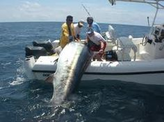 We were just standing around talking, when this big fish just jumped right into the boat...