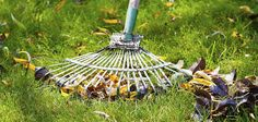 Early Spring Lawn Care Tips Are you unsure of what to do for your lawn in the early spring? Knowing what to do with your lawn as spring takes over from winter will help you grow an extraordinarily. Fall Lawn Care, Lawn Care Tips, Lawn Care Companies, Lawn Service, Pergola Pictures, How To Make Smoothies, Yard Care, Landscaping Company, Gardens