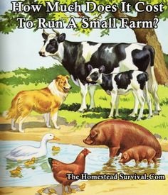 How Much Does It Cost To Run A Small Farm- that's it, I'm going to do it, I have an acre, so that should be enough