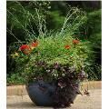 Beautiful container planting ay outs for all sun/shade areas.