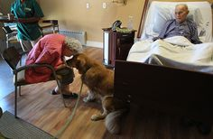 Patrick the hospice dog visits with Mary and Warren Rand, who have been married 71 years, at a hospice in Danvers, Mass. on September 12, 2012. (Suzanne Kreiter/Globe staff) Animals and their people - The Big Picture - Boston.com