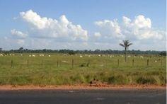 """3   """"Agora todo fazendeiro tem o CAR"""", diz indígena ameaçado em Boca do Acre   Antonio Apurinã preside o Conselho de Organização do Povo Apurinã e Jamamadi. Mora em uma das Terras Indígenas ainda não demarcadas pela FUNAI; ele conta que Cadastro Ambiental Rural está sendo invocado para regularizar terras griladas."""