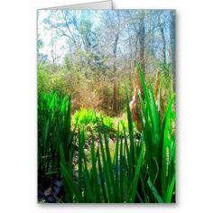 Louisiana Iris, Creek Side, cards