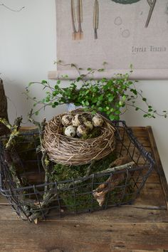Easter decoration with natural moss Mühlenbeckia quail eggs just make yourself Deco de ., Easter decorations with natural moss Mühlenbeckia quail eggs just make your own deco . Easter decorations with natural moss Mühlenbeckia quail eggs . Rama Seca, Quail Eggs, Garden Deco, Autumn Garden, Easter Wreaths, Easter Crafts, Easter Decor, Greenery, Farmhouse Decor