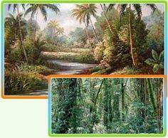 Tropical rainforests are forests mostly found close to the equator. Tropical rain forests are highly common in Africa, Asia, Central America, South America and on many Pacific Islands. Within the classification scheme of World Wide Fund biome, these forests are identified as a kind of tropical wet forest or tropical moist broadleaf forest and can also be denoted as lowland equatorial evergreen forests.