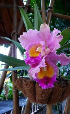 Orchids-one of my very favorite flowers