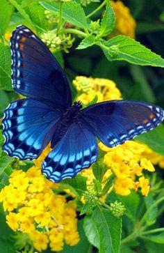 Butterflies love flowers, too.