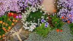 20 Blooming Rock Garden Design Ideas and Backyard Landscaping Tips Small Backyard Landscaping, Landscaping With Rocks, Landscaping Tips, Backyard Ideas, Rock Garden Design, Rock Garden Plants, Rockery Garden, Garden Pictures, Garden Photos