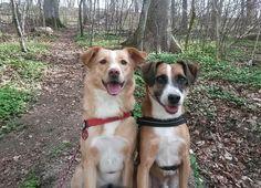 Hunde Foto: Julia und Lara und Nabio - Wo sind jetzt die Leckerlis, Frauchen.jpeg Hier Dein Bild hochladen: http://ichliebehunde.com/hund-des-tages  #hund #hunde #hundebild #hundebilder #dog #dogs #dogfun  #dogpic #dogpictures