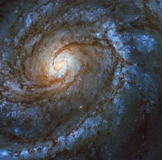 This stunning spiral galaxy is Messier 100 in the constellation Coma Berenices, captured here by the NASA/ESA Hubble Space Telescope. Galaxy Images, Hubble Images, Nasa, Cosmos, Hubble Space Telescope, Space And Astronomy, Types Of Galaxies, Ciel Nocturne, Astronomy Pictures