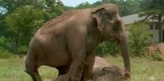 Two Elephants Reunited After Over 20 Years..What Happens Next Can't Be Described