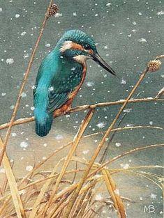 Eclat Bleu du Martin-Pêcheur sous la Neige...