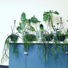 joannafowles: Plants have arrived to decorate @peopleofprocess studio space…