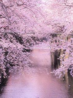 A beleza das cerejeiras em flor em todo o mundo Rio Meguro, Japão