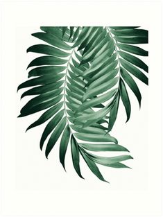 """Letter Discover Palm Leaves Tropical Green Vibes Art Print by anitabellajantz """"Palm Leaves Tropical Green Vibes """" Art Prints by anitabellajantz Interior Tropical, Tropical House Design, Tropical Furniture, Tropical Home Decor, Tropical Colors, Tropical Houses, Tropical Leaves, Tropical Art, Tropical Vibes"""