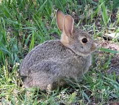 Image result for rabbits