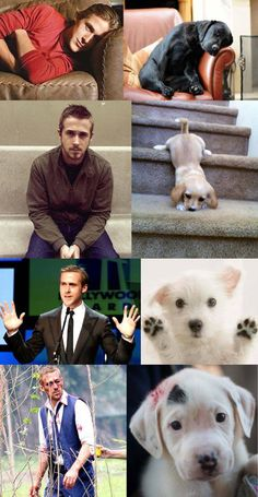 Ryan Gosling vs Puppy  I'm sorry, but the puppy clearly wins...