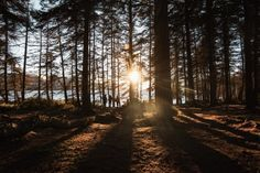 Le mystérieux Loch Ness et sa nature sauvage...   #lochness #loch #lake #alainntours #scotland #ecosse #forest © Unsplash Inverness, Highlands, Outlander, Monstre Du Loch Ness, Chutes Victoria, Bali, Nature Sauvage, Destinations, Kayak