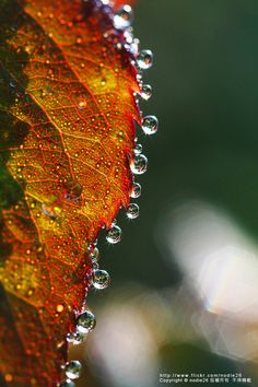 "~ Autumn ~ "" . . . a falling raindrop scatter on a trembling leaf then roll of its tip in a cascade of pearls"" ~ Prabhukrishna M"