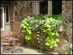 Sweet potato vine,vinca vine,wave petunias,geraniums- To put in pots on porch
