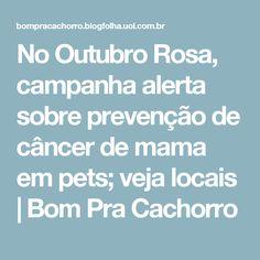 No Outubro Rosa, campanha alerta sobre prevenção de câncer de mama em pets; veja locais   Bom Pra Cachorro
