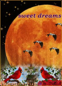 Archetypal Flame - sweet dreams
