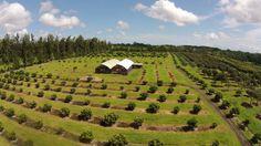 tropical fruit plantation