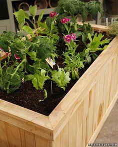 Martha Stewart's Organic Gardening Tips