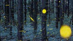Luciérnagas transforman un atardecer normal en una obra de arte