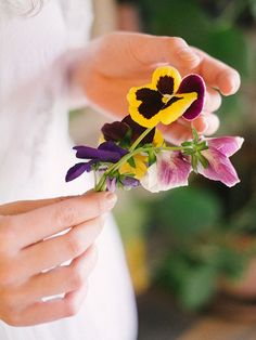 cbf4a241dafa5fd8f4176753b3b2dd76--pansies-pansy-flower.jpg (600×800)