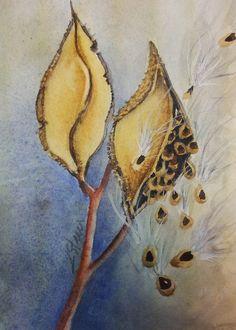 Milkweed Pods Small