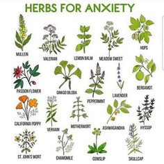 Tremendous Herb Gardening The Many Good Things About It Ideas Gardening Herbs The Green Witch on Healing Herbs, Medicinal Plants, Holistic Healing, Wiccan, Magick, Wicca Herbs, Tarot, Herbs For Anxiety, Anxiety Help