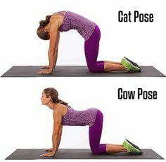 mucca-e-gatto-yoga-pose