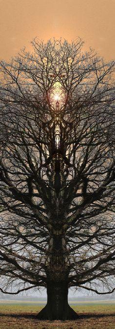 Totemtrees (janfufu 2013) 003-IMG_5996-b