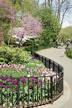 Central Park, NYC. Shakespeare's garden