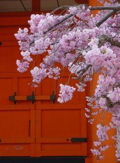 KyotoBlog4.2013g