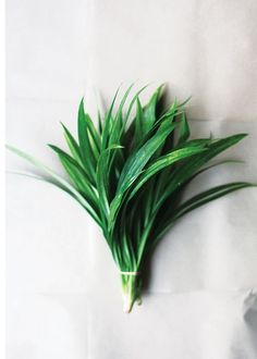 Blades of glory: the Southeast Asian grass called pandan brings floral vivacity to all sorts of dishes.